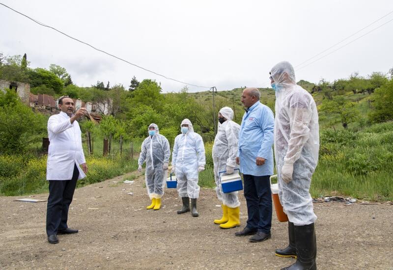На освобожденных территориях проводится вакцинация диких животных