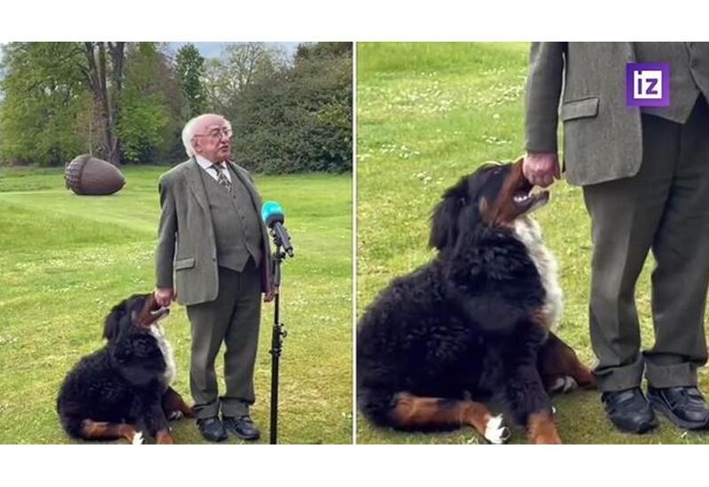 Щенок президента Ирландии пытался поиграть с хозяином во время интервью