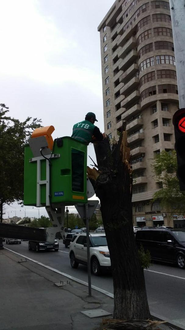 Сильный ветер повалил деревья в Баку