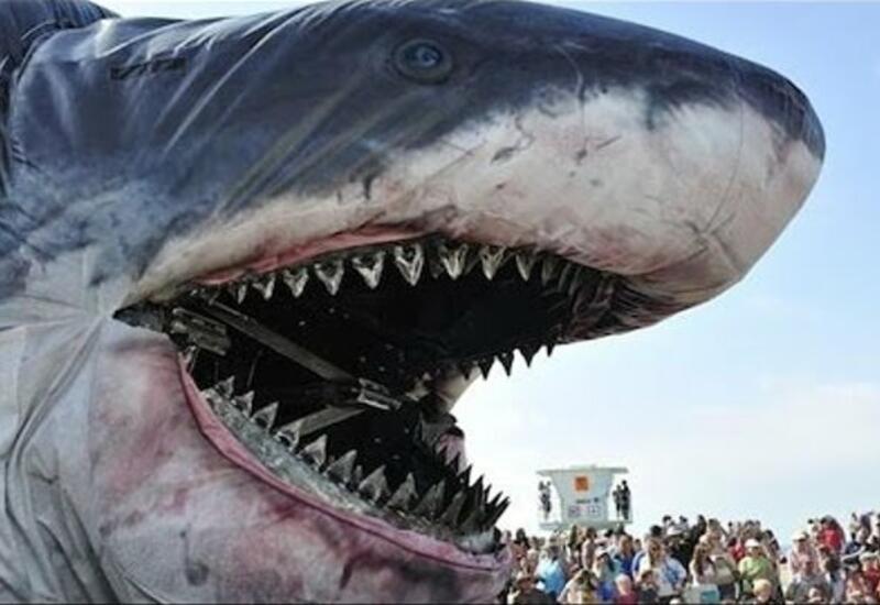 5 самых невероятных происшествий в океане