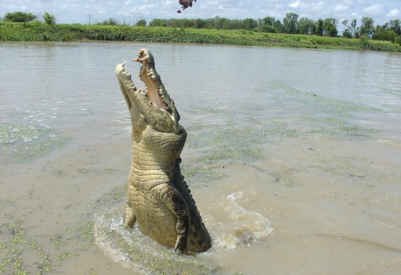 10 атак, крокодилов снятых на камеры