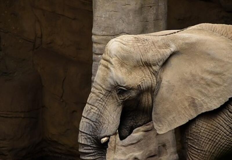 Суд в США получил иск от имени слонихи