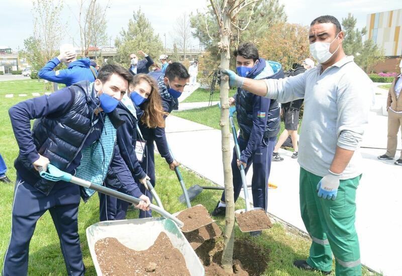 В преддверии 16-го чемпионата мира по аэробной гимнастике в Баку прошла акция по посадке деревьев