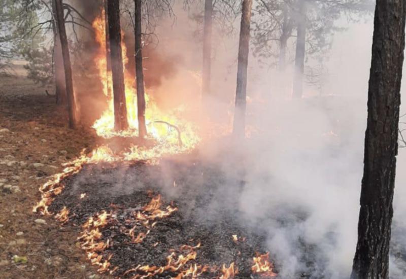 В России тушат крупный лесной пожар