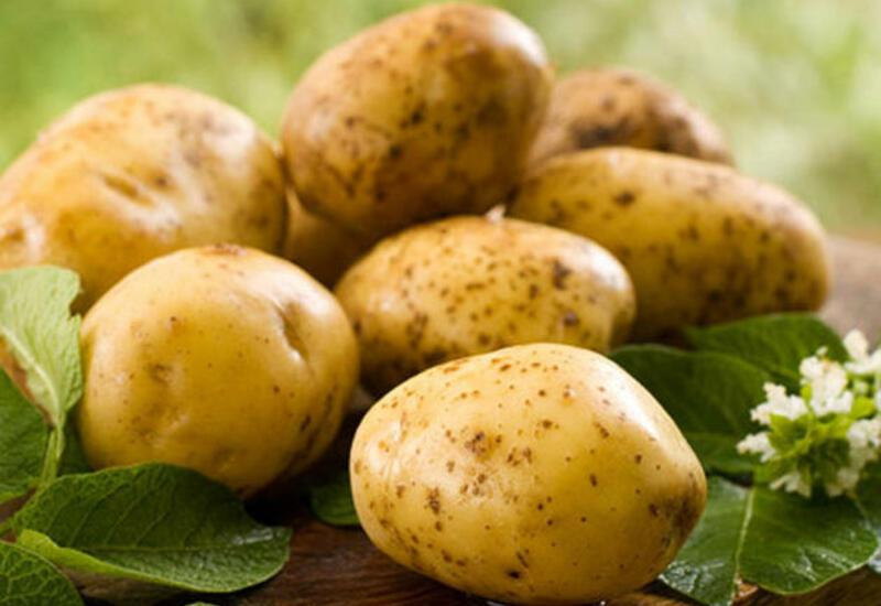 В Азербайджане начали выращивать новый сорт картофеля