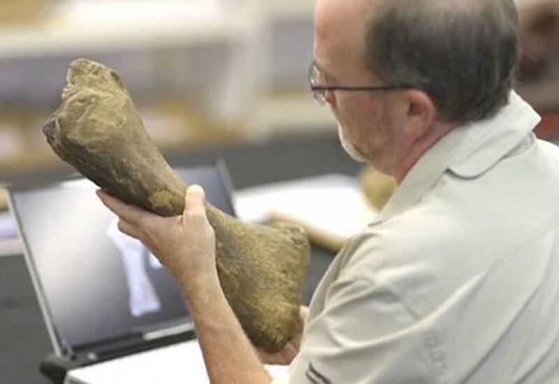 Ученые определили вид одного из крупнейших динозавров в мире