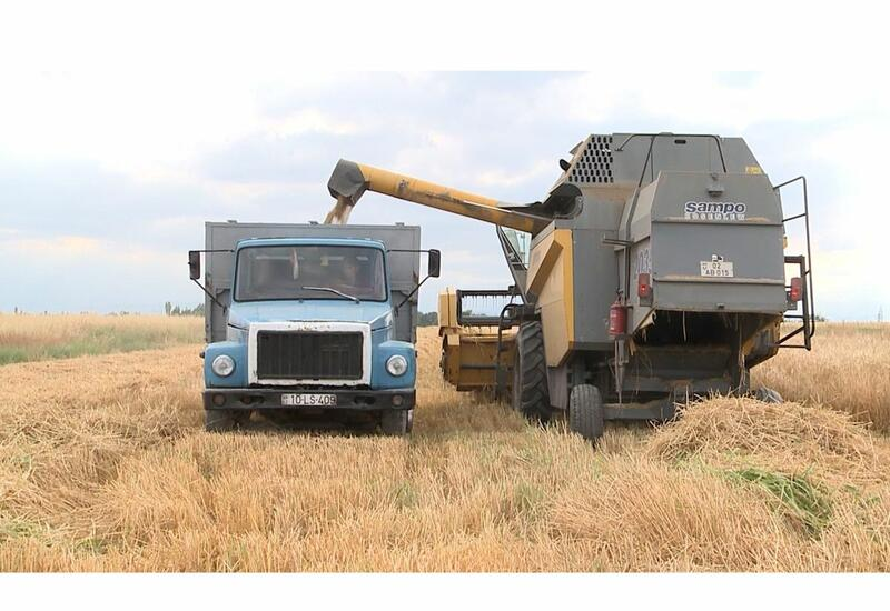 В Карабахе началась уборка зерновых