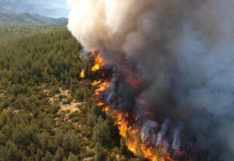 Лесные пожары бушуют в российских регионах