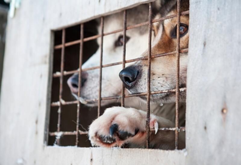 США запретят ввоз собак из 113 стран