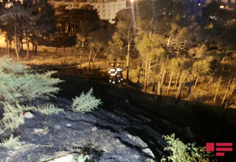 МЧС о пожаре в Нагорном парке