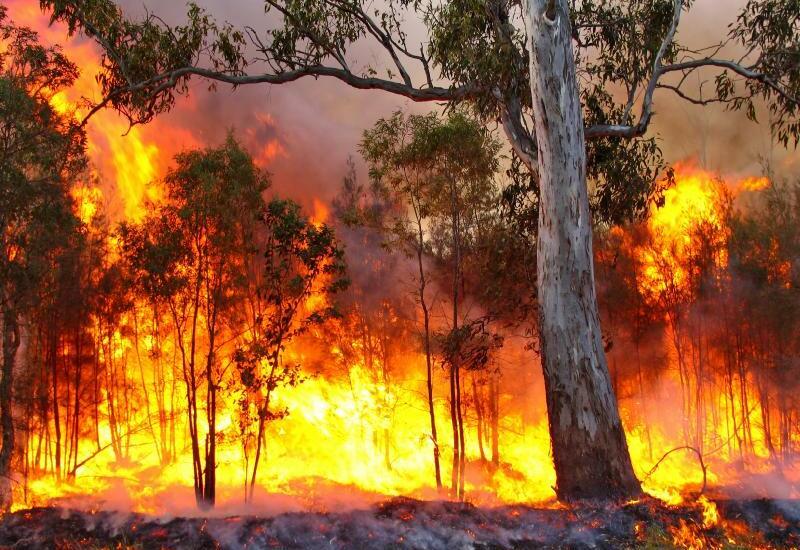 Площадь природных пожаров в России выросла на 7 тыс. гектаров