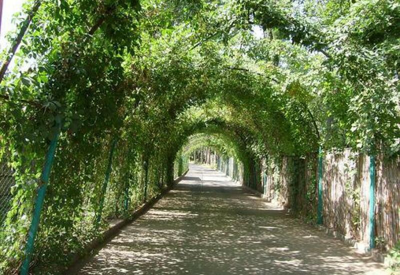 В Баку создадут новый Ботанический сад