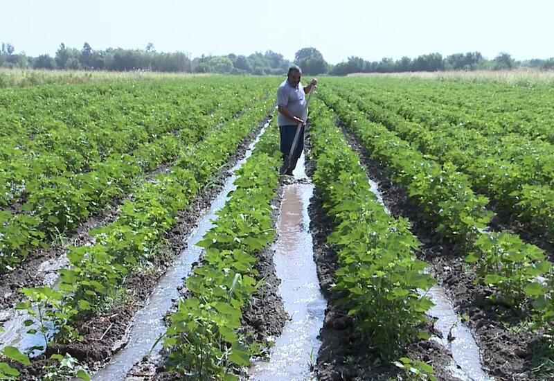 В селах Агдама близ освобожденных территорий продолжаются посевные работы