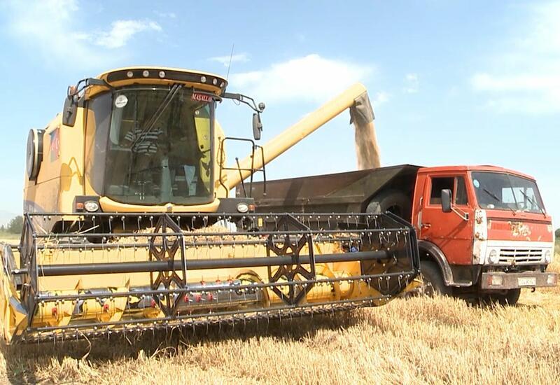 В Тертере близ освобожденных территорий убирают пшеницу