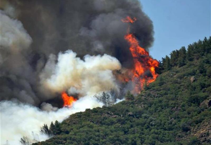В Турции горят леса