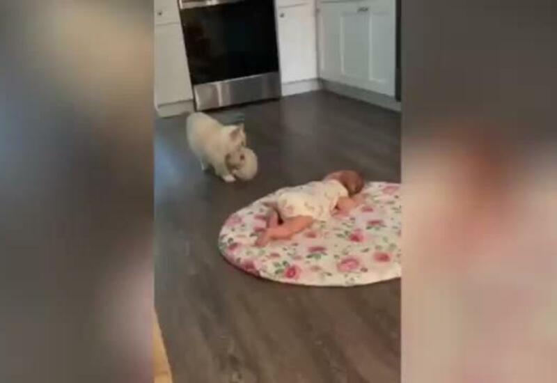 Решившая познакомить котенка с младенцем кошка растрогала Сеть