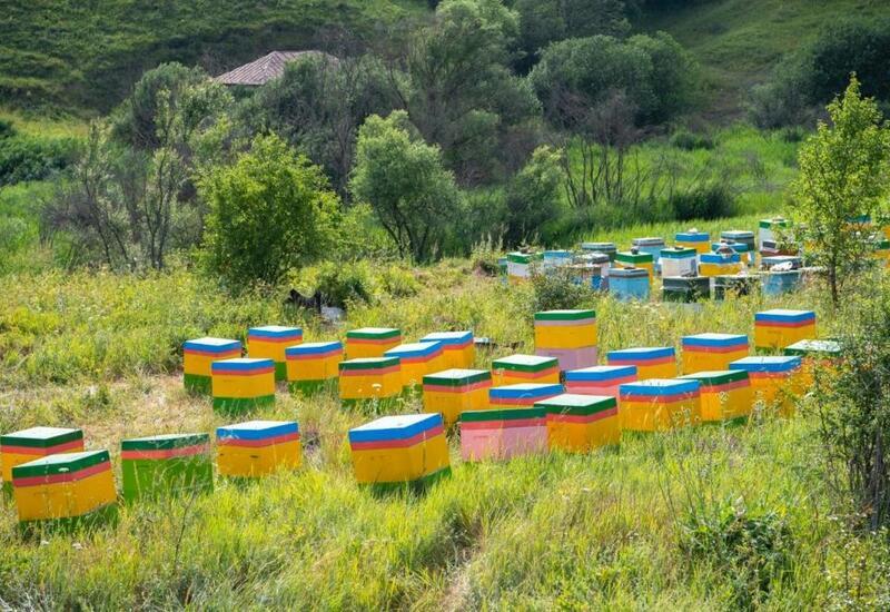 Для женщин-фермеров Кюрдамира создадут пчеловодческие хозяйства
