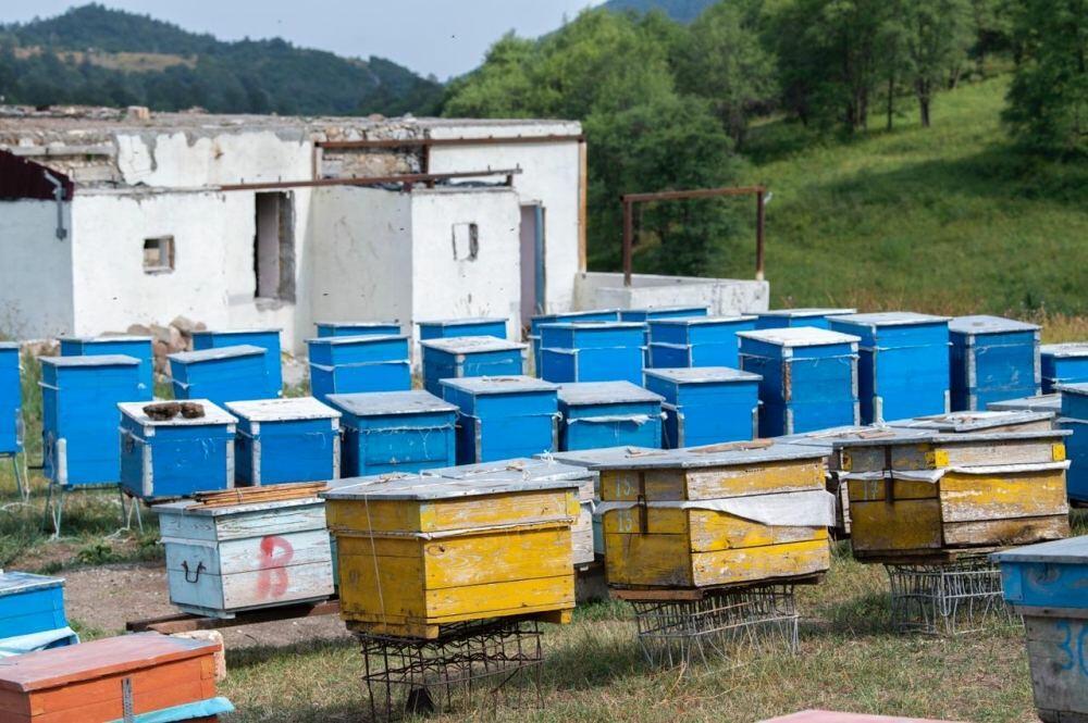 Вслед за Кельбаджаром пчеловодческие хозяйства перенесены и на пастбища Лачина