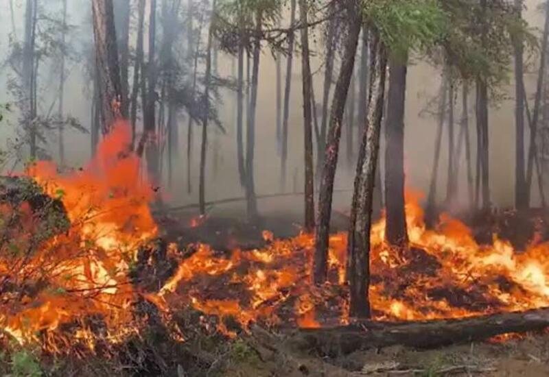 С лесными пожарами в России начали бороться взрывчаткой