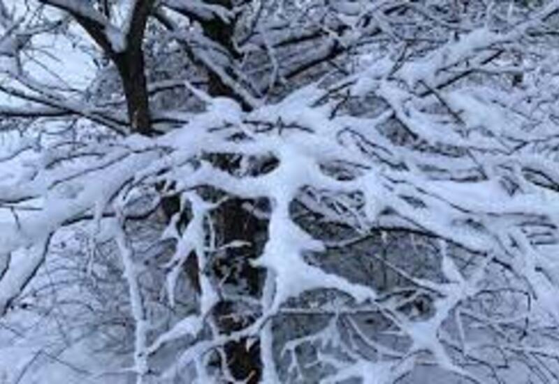 В России и Бразилии выпал снег