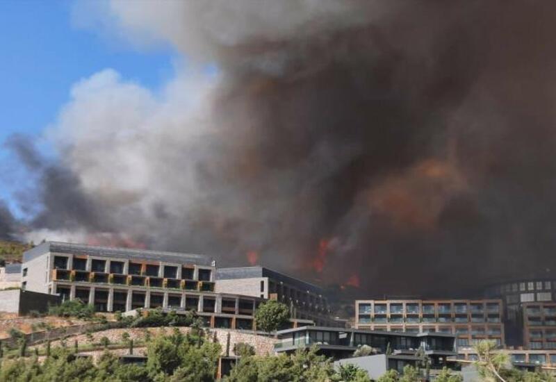 Новые подробности лесных пожаров в Турции