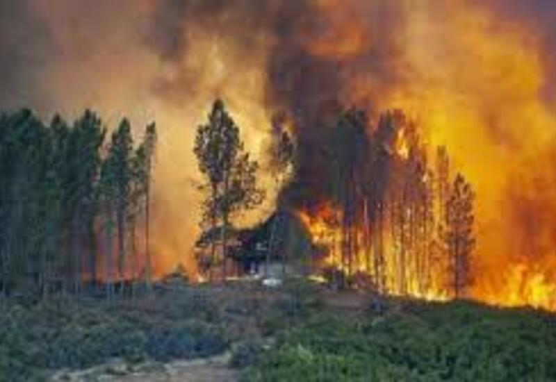 В Турции началось расследование причин возникновения лесных пожаров
