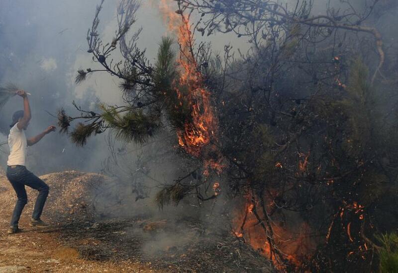 Массивные лесные пожары охватили и Ливан