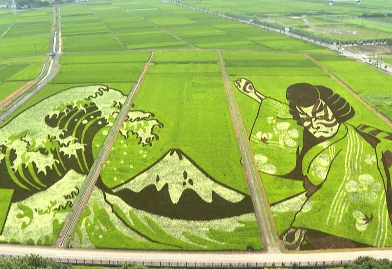 Картины на рисовых полях в честь Олимпийских игр