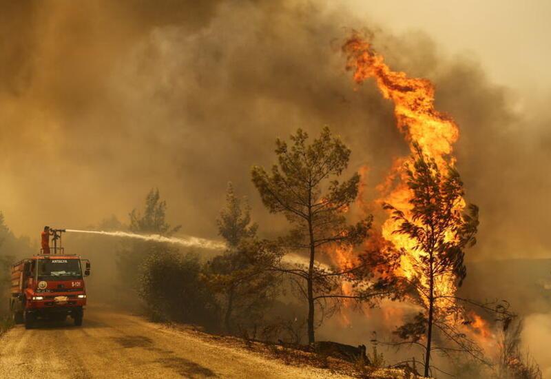 Число погибших от лесных пожаров в Турции достигло 6