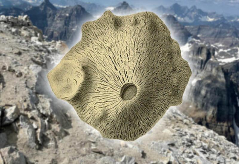 Древнейшим животным может оказаться губка, которой 890 млн лет