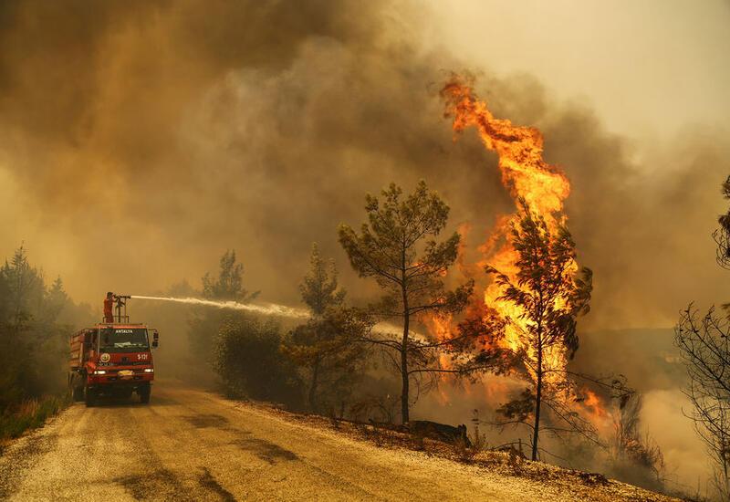Турецкие пожарные локализовали почти все лесные пожары в стране