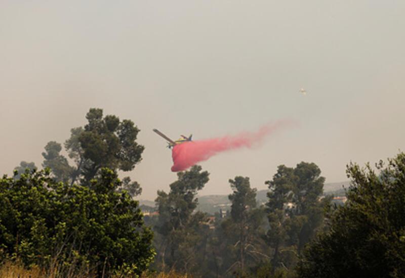 В Израиле разгорелись неконтролируемые лесные пожары