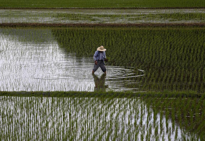 Северная Корея раздает армейские запасы продовольствия для предотвращения голода