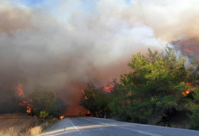 167 лесных пожаров в Турции локализованы