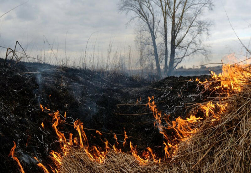 Пожар в горной местности в Габале