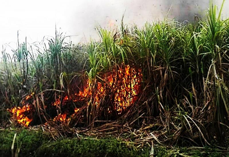 Пожар в Гызылагаджском национальном парке