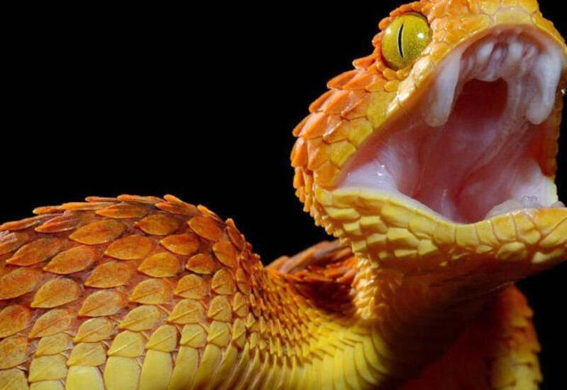 Змея напала на ребенка в контактном зоопарке в России