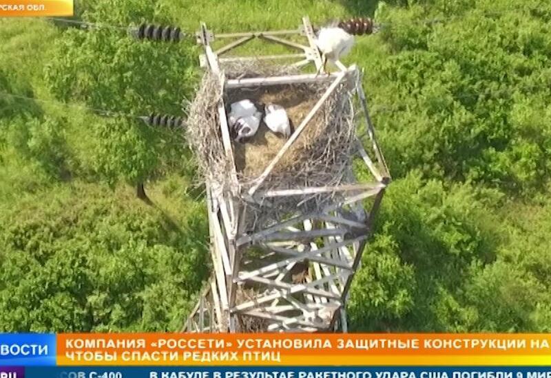 В России придумали как спасти исчезающих птиц