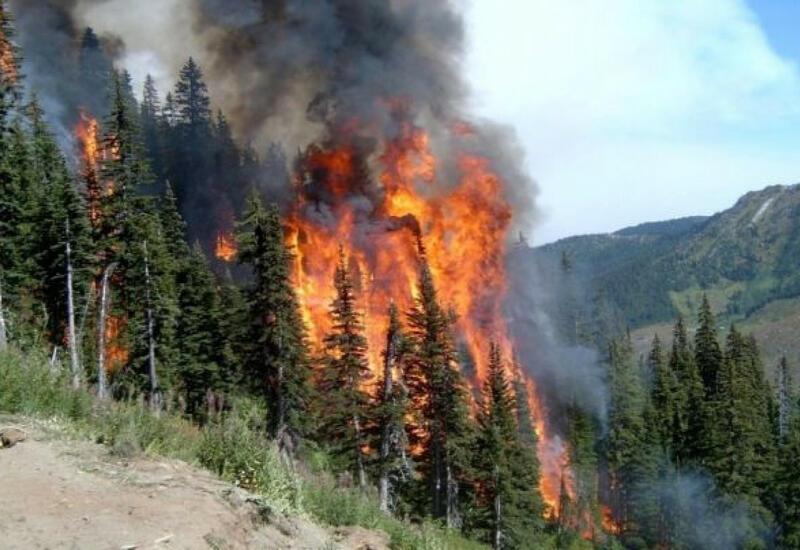 Более 205 тыс. га леса горит на территории России