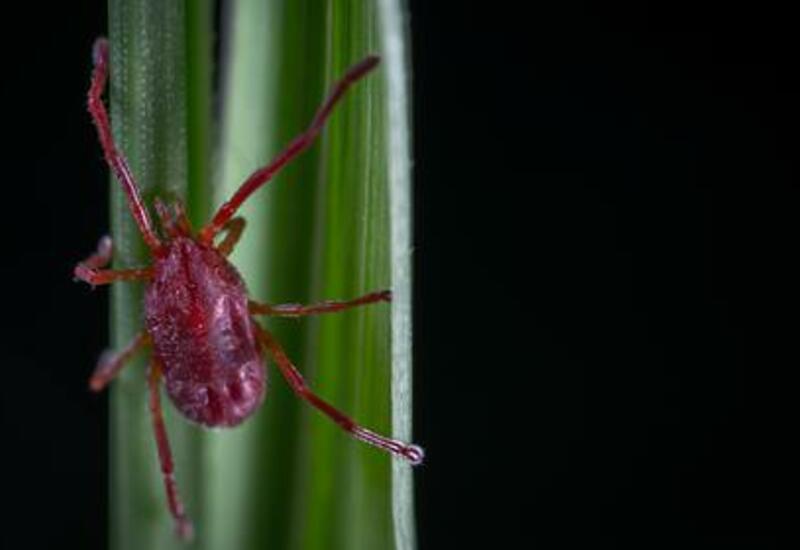 Российские ученые обнаружили вызывающий лихорадку вирус