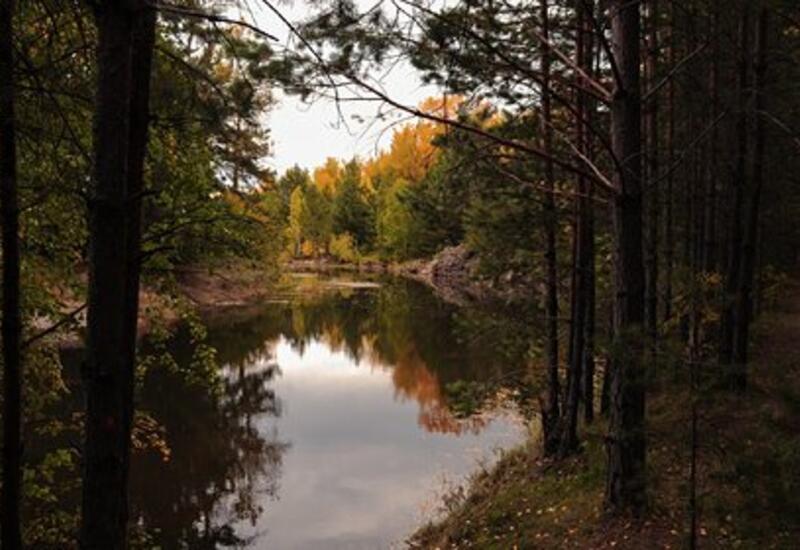 Пропавшая россиянка более двух недель выживала в сибирской тайге