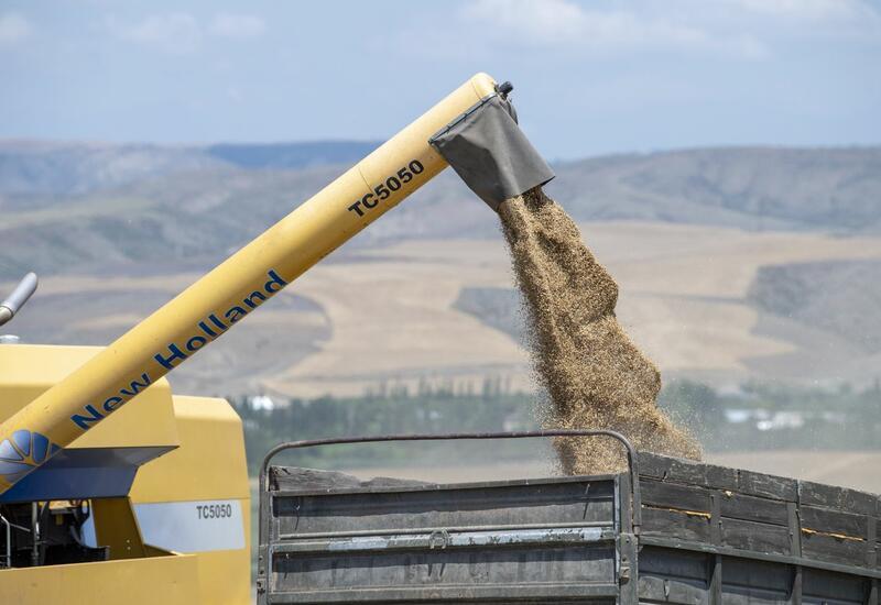 В Азербайджане поставщикам пшеницы предоставят субсидии