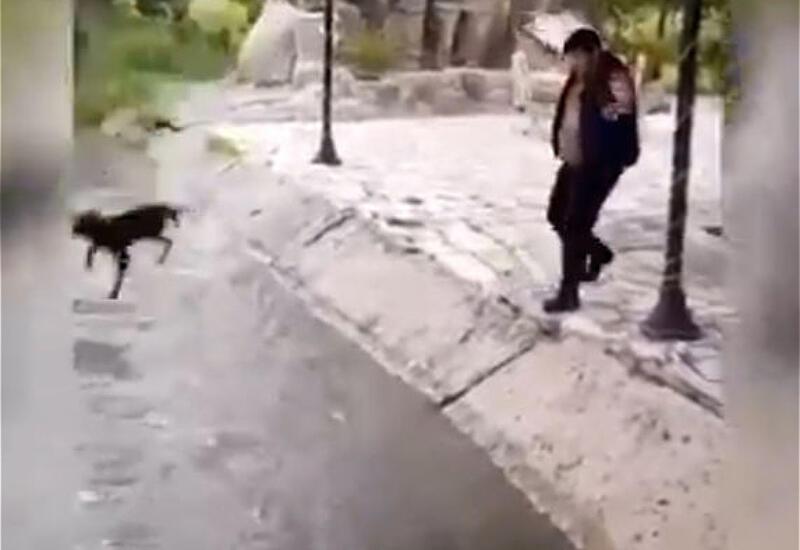 Бросивший собаку в канал мужчина привлечен к ответственности