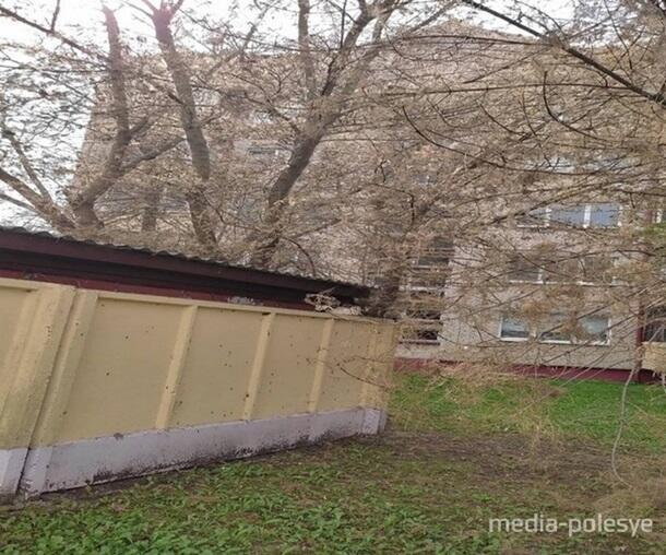 В Беларуси город заполонили гусеницы