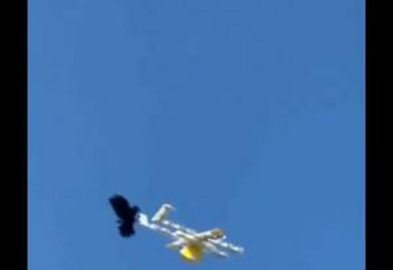 Google приостановил полеты дронов-курьеров в Австралии из-за нападений воронов