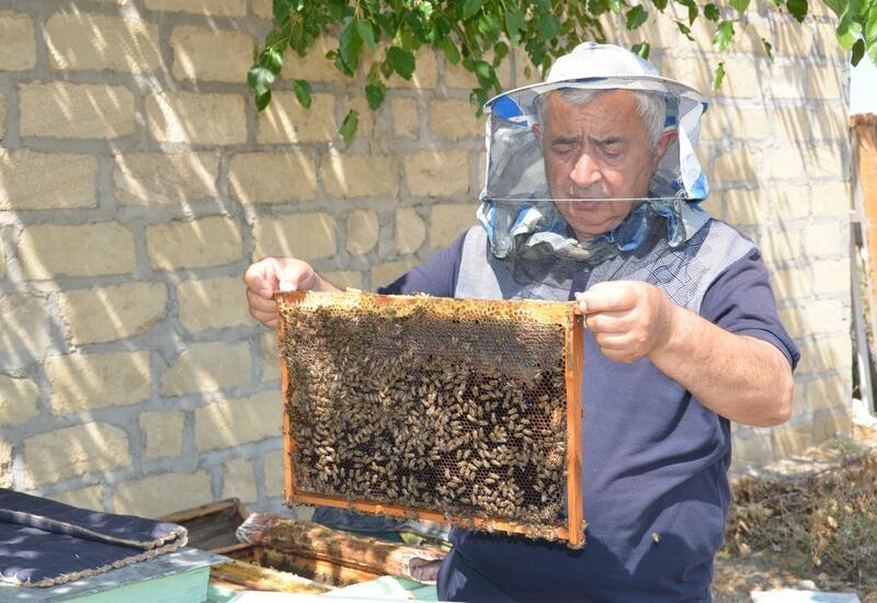 В Азербайджане успешно испытали устройства для увеличения продуктивности пчел