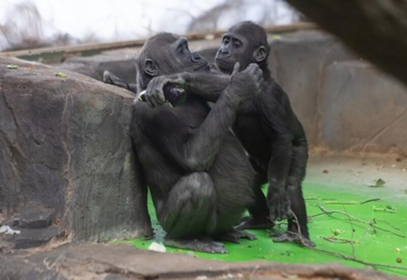 В США началась вакцинация животных в зоопарках от коронавируса