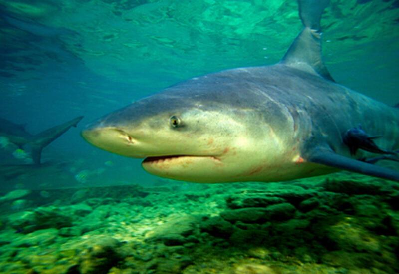 15-летний подросток в США потерял 70 процентов крови после нападения акулы