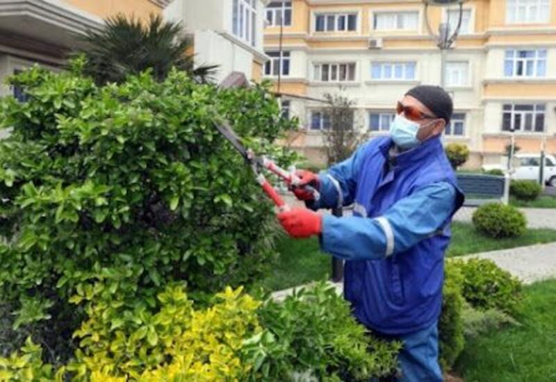 В Азербайджане по программе оплачиваемых общественных работ трудоустроены более 50 тыс. человек