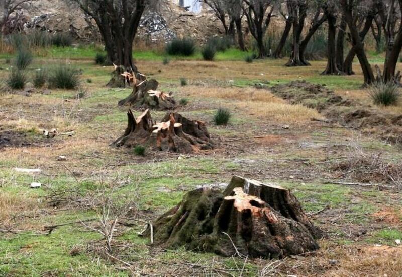 Международные организации должны расследовать экологический террор, совершенный армянами во время оккупации азербайджанских территорий